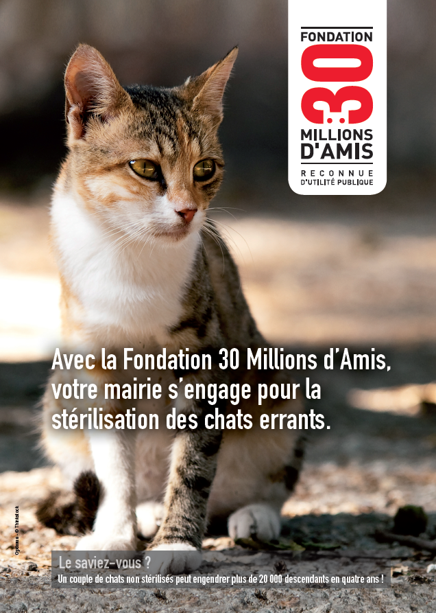 Affiche chats errants